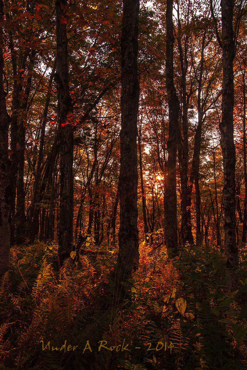 IMAGE: http://ryanmaurerphoto.tripod.com/spruce1.jpg